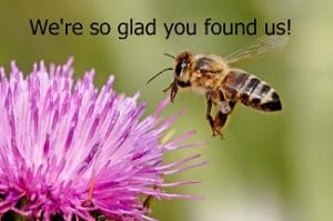 "close up of a honey bee about to land on a thistle pink flower with the caption ""We're so glad you found us!"" welcome page for Beneficial Botanicals"